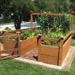 vegitable garden kit